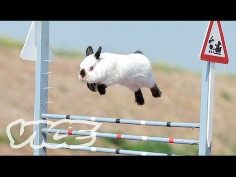 Cute Bunny Jumping Competition! | The Cute Show
