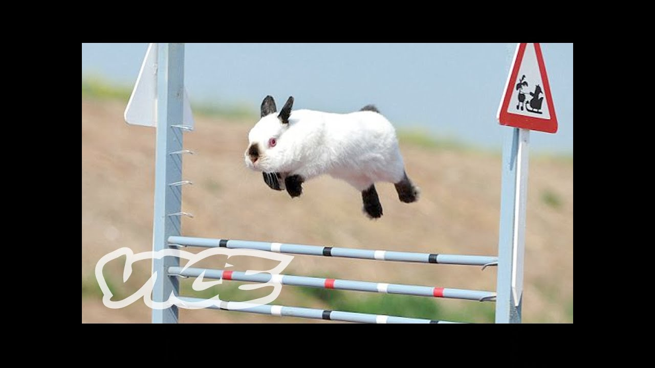 Cute Bunny Jumping Competition Youtube