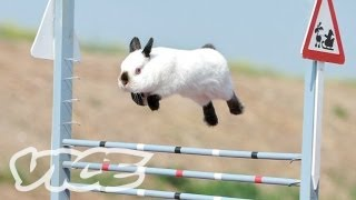 Repeat youtube video Cute Bunny Jumping Competition!