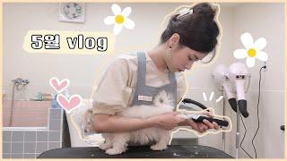 [vlog] 7월에 올리는 5월 브이로그  (애견미용사…