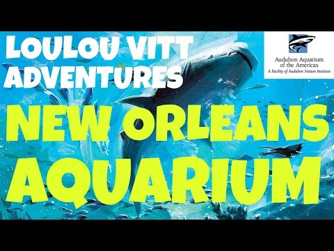 TRAVEL ADVENTURE to the Aquarium of the Americas in New Orleans! COME WITH US!