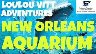 travel adventure to the aquarium of the americas in new orleans come with us