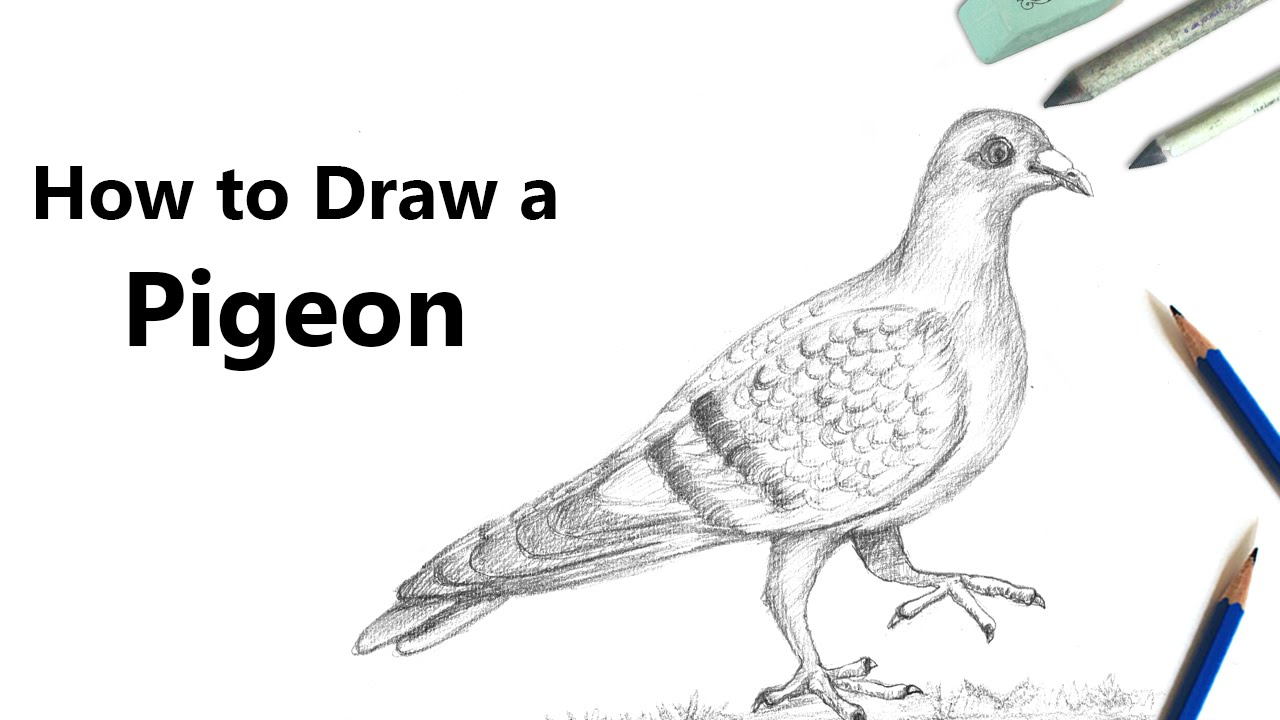 How To Draw A Pigeon With Pencil Speed Drawing Youtube
