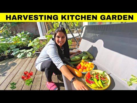Organic VEGETABLE Garden Harvesting DAY-OCT 2021 | Kitchen Garden in England