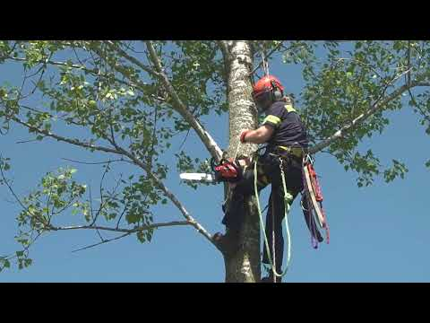 Why ECHO? - Power, Performance, Dependability