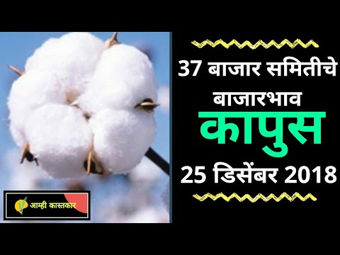 25 डिसेंबर - आजचे कापसाचे बाजार भाव | कपास के भाव | Cotton Market Rates APMC Maharashtra | नक्की पहा