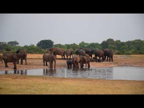 18102017 Hwange Masuma Dam Elephants 2