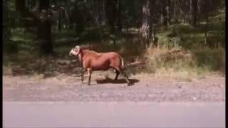 Dziwne zwierzę w lasach Wieruszów - Osowa