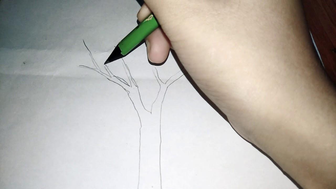 Cách vẽ cây