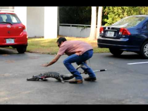 On50 tampa alligator 2010 youtube for Select motors of tampa tampa fl