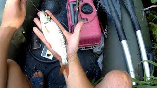 Где искать рыбу летом в июле на реке Рыбалка поплавочной удочкой на кукурузу Рыбалка на спиннинг