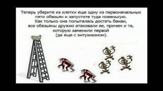 Стадное чувство . про обезьянок.