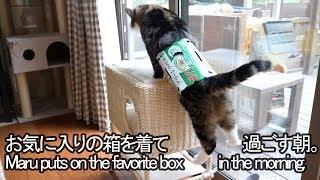 箱を着て1日を始めるねこ-maru-puts-on-the-box-at-the-start-of-the-day