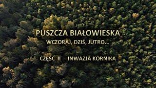Puszcza Białowieska. Wczoraj, dziś i jutro. Część 2 - INWAZJA KORNIKA