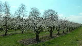 NETHERLANDS Springtime in De Betuwe, Gelderland (hd-video)