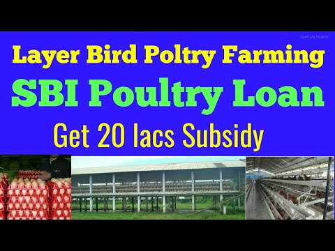 SBI Layer Bird Poultry Farming Loan | How to get subsidy in