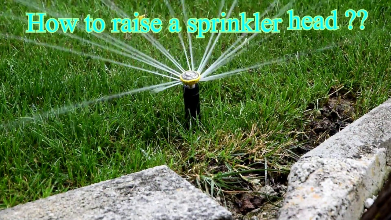 How To Raise And Clean A Sprinkler Head Rain Bird Youtube
