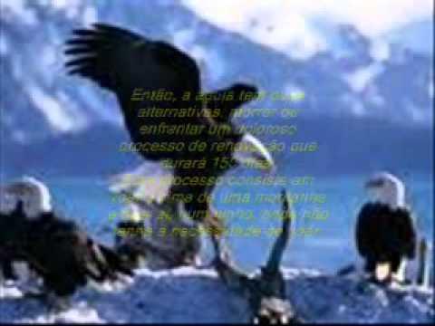 A sabedoria da Águia
