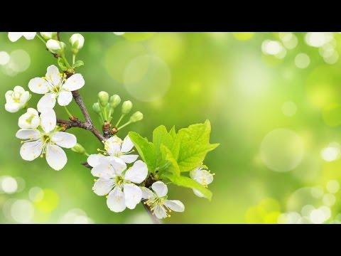 romantic-background-music-/-beautiiful-cinematic-piano-instrumental---by-ashamaluevmusic