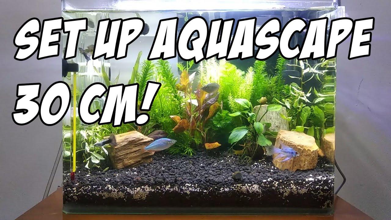 Set Up Aquascape 30cm Sederhana Aquascape Indonesia Youtube