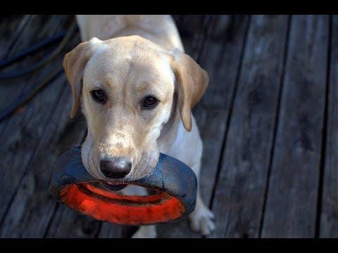 make-your-dogs-toys-last-longer!