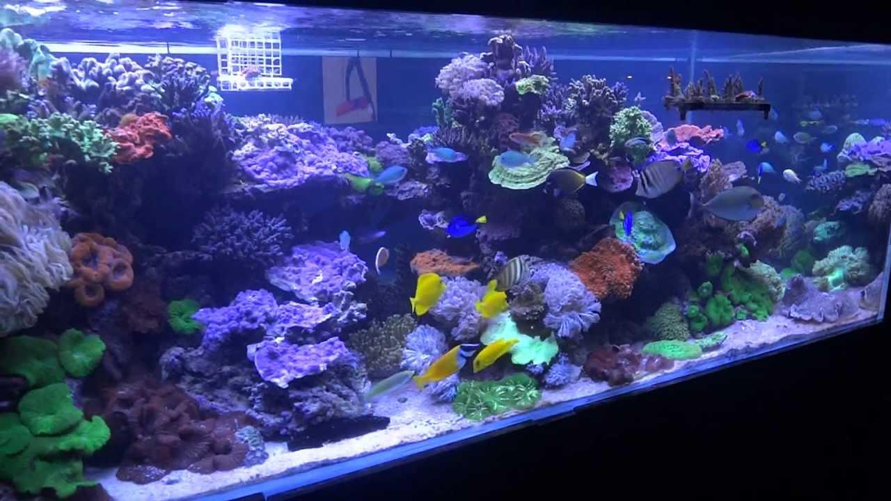 Fish Shop 101 Encinitas