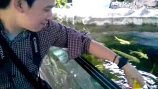 Isha goes to : Manila Ocean Park (Part 1)