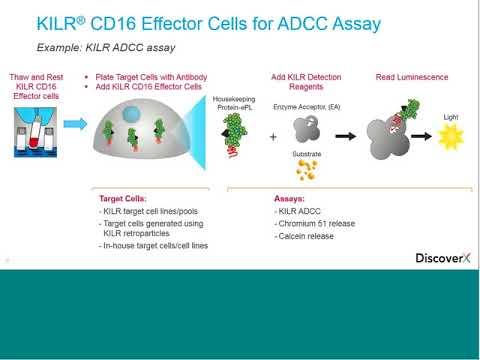 KILR CD16 Effector Cells