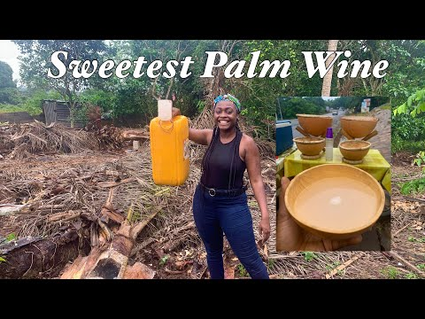 How Palm Wine is Made in Ghana ?? - An African Favorite Beverage