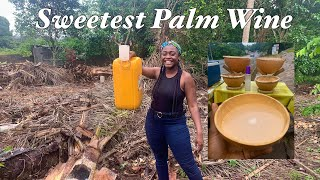 How Palm Wine is Made in Ghana  - An African Favorite Beverage