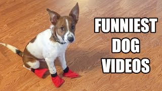 TRY NOT TO LAUGH WATCHING FUNNY DOG VIDEOS 2021 #2 - Daily Dose of Laughter!