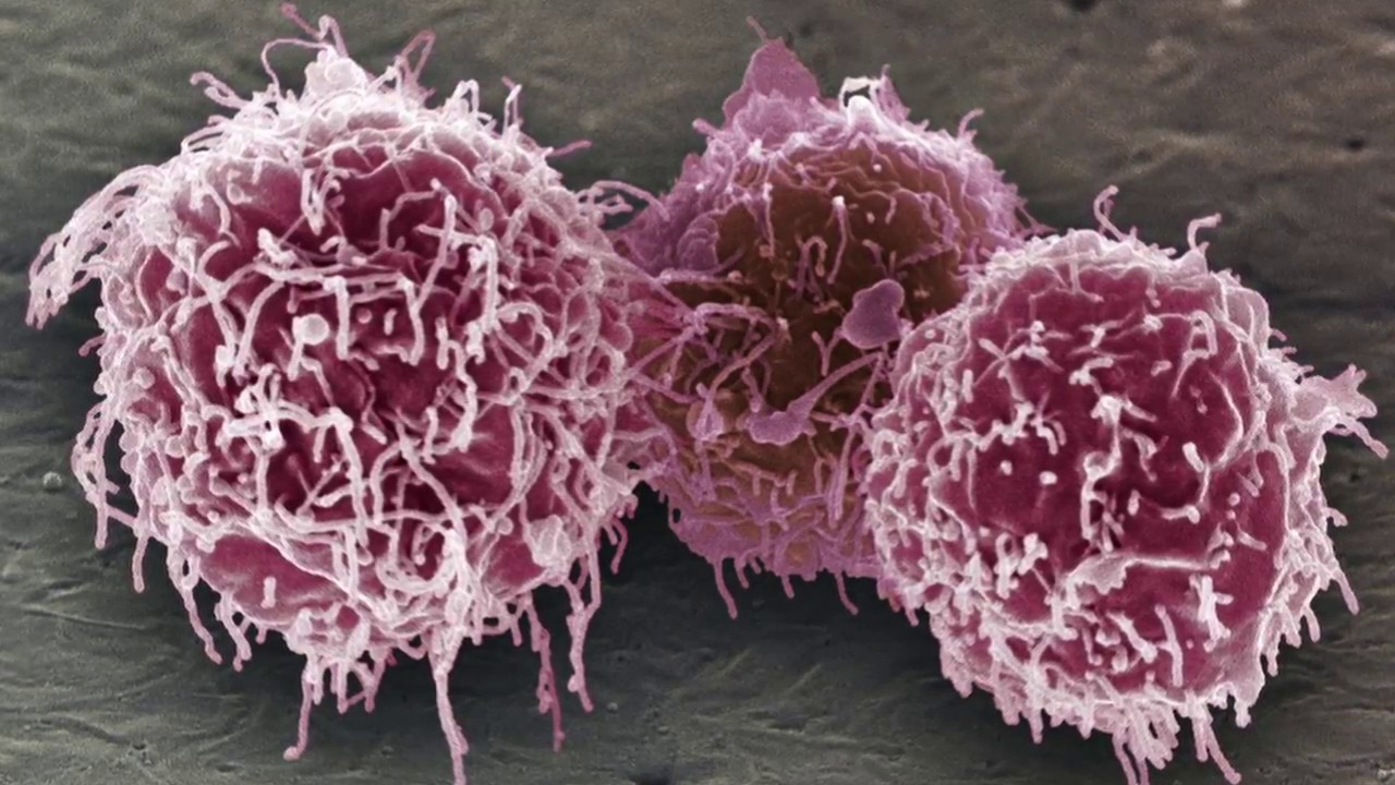 Clasificacion de leucocitos y su funcion
