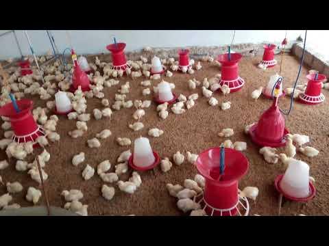 Sri Sai dattha Lakshma poultry farm 508355