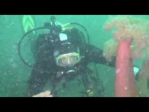Scuba Dive Redondo Beach Wa