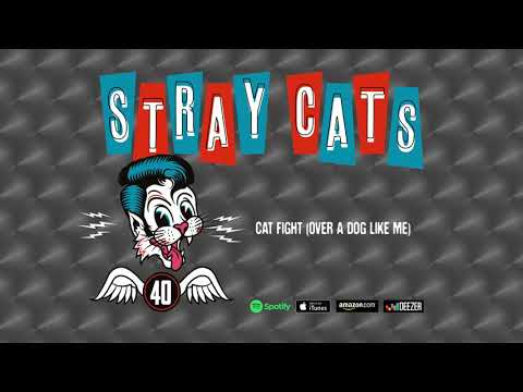 Don Action Jackson - Stray Cats: New Song, And In The Studio Recording Upcoming Album