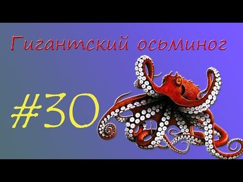 Вопрос: С какой скоростью под водой движется гигантский кальмар?