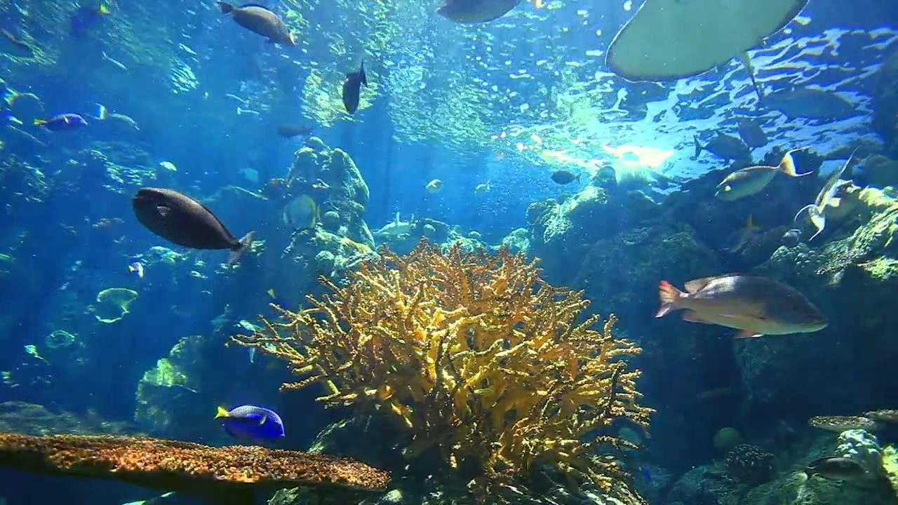 Des poissons dans l 39 oc an pacifique youtube - Image poissons ...