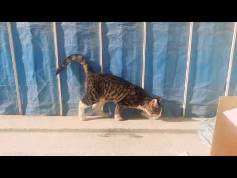 Kedi replikleri guneslenen kedi