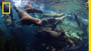 Three New Marine Parks Protect Stunning Biodiversity | National Geographic