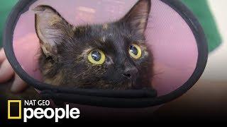 Kotka przeszła operacje amputacji ogona! [Doktor Miller i jego zwierzęta]