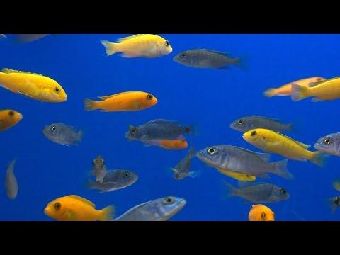 AQUARIUM FISH   They Massage Your Body