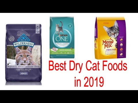 Top 10 Best Dry Cat Foods Of 2019   Buy From Amazon