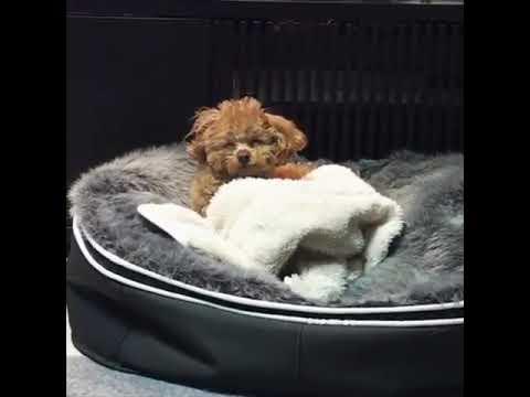 Pet Lounge - самый мягкий и прочный лежак для собаки