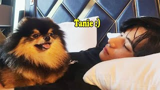 BTS with YEONTAN (Don't fall in love with YEONTAN Challenge)