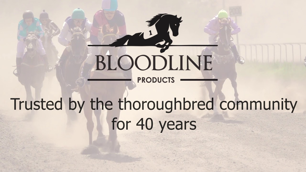 Bloodline Products – Custom Horse Racing Apparel Online Shop
