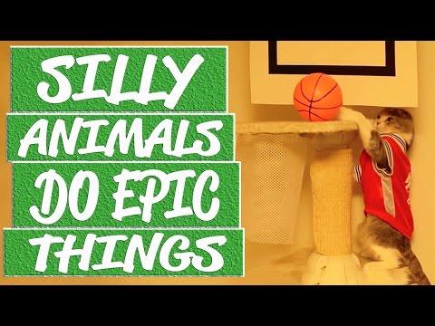 Silly animals videos