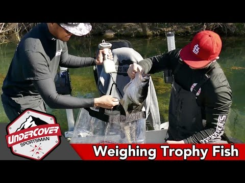 How To Weigh Trophy Fish