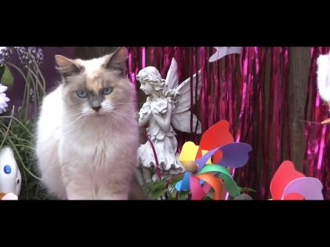 Happy Mother's Day, From the Cats - Furball Fables