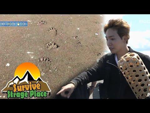 ['JINWOO' In Kamchatka, Russia] JINWOO, Found bear's footprints On The Shore 20170903