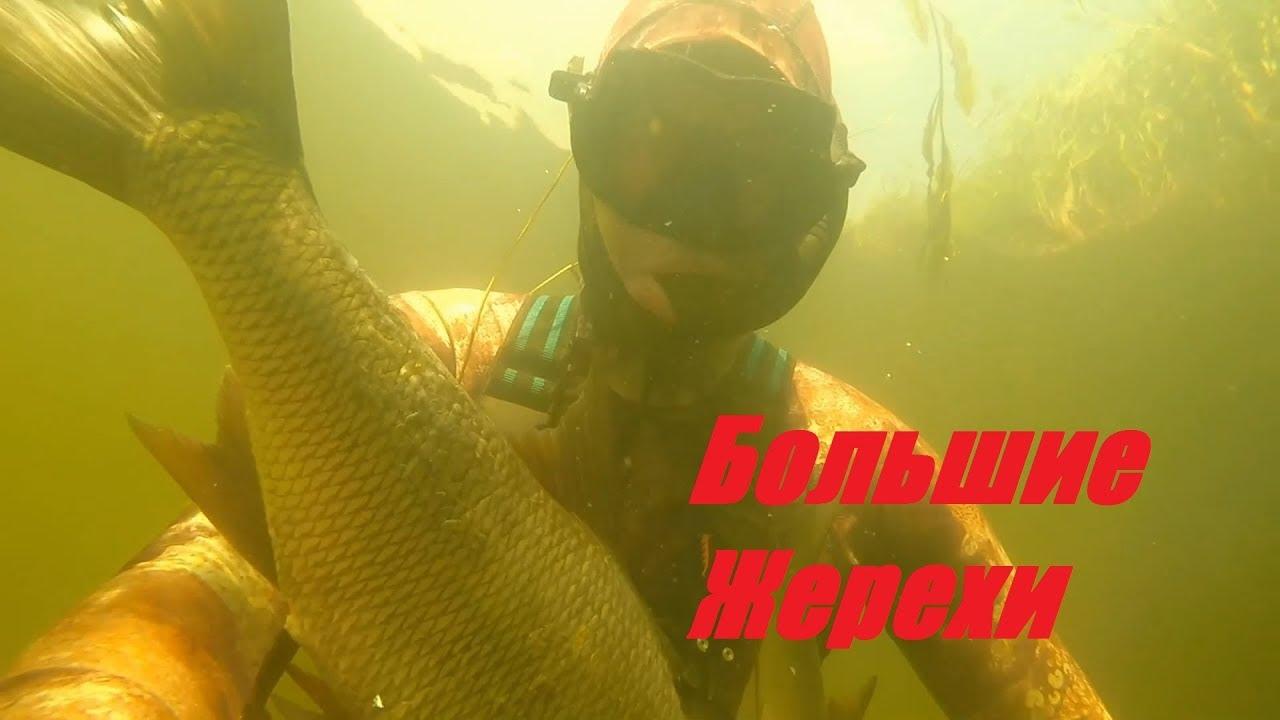 Вот это Кайф!!!Прозрак и Большие Жерехи!подводная охота на малой реке.